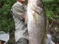 Papuan Big Black Bass and Barra