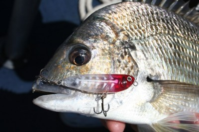 Lure Fishing, by Craig McGill