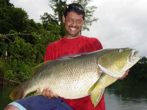 Baia lodge papuan black bass fishing catch huge papuan for Big bass fishing