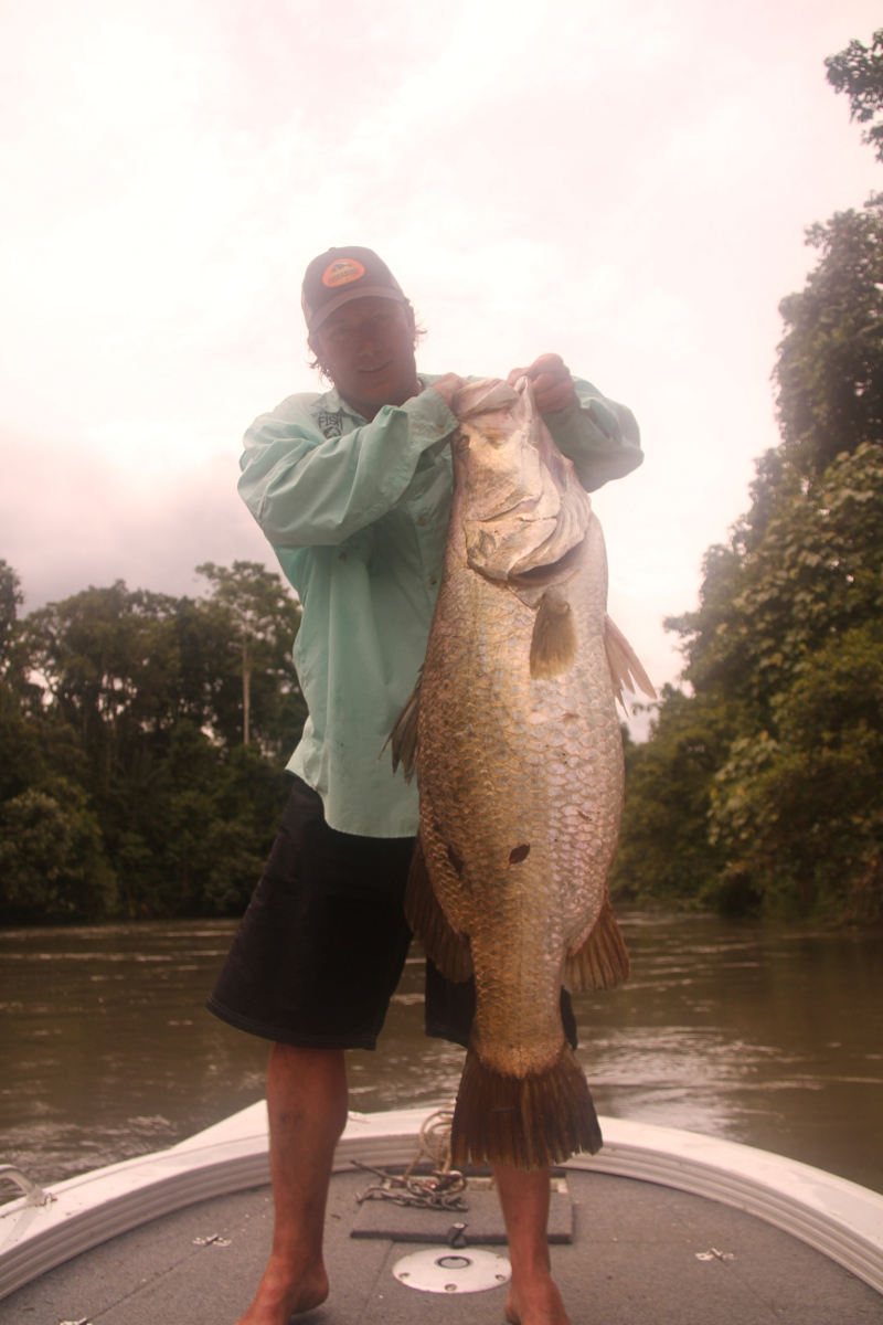 Barramundi from the Gulf Rivers Backwaters