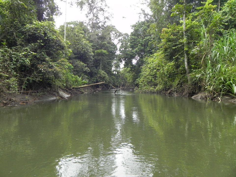 PNG Black Bass country