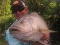 PNG Black Bass (Lutjanis Goldiei)