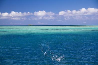 Coral Reef Fishing